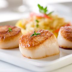 seared scallops; shellfish